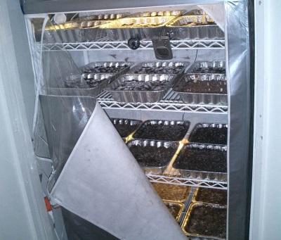 Pilzanbau zu Hause
