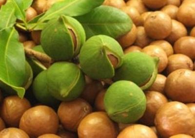 Macadamianuss ist reich an Spurenelementen, die für den Körper von Nutzen sind