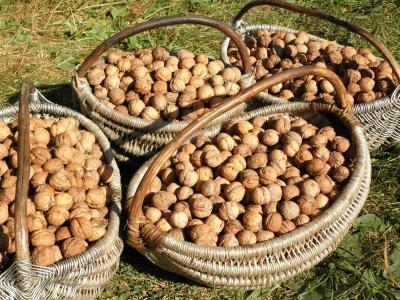 Kacang-kacangan mesti disimpan selama beberapa bulan untuk menghasilkan mentega.
