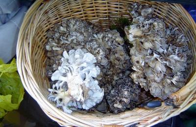 Ενδιαφέροντα γεγονότα για τα μανιτάρια maitake