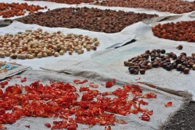 Производство на земеделско орехче