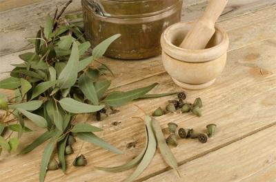 Charakterystyka nalewki eukaliptusowej