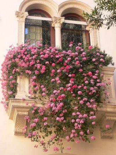 Portulac labi rotā balkonus, dārzus, puķu dobes.