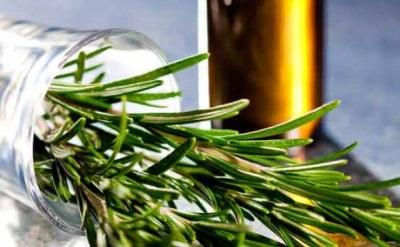 Получаване на етерично масло от розмарин