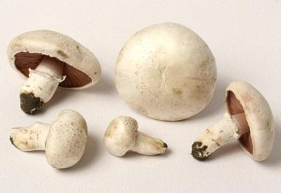Champignons werden für medizinische Zwecke verwendet.
