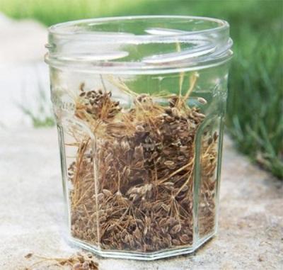 Бульон и чай от семената на копър