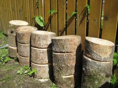 Κορμούς για την καλλιέργεια μανιταριών στρειδιών