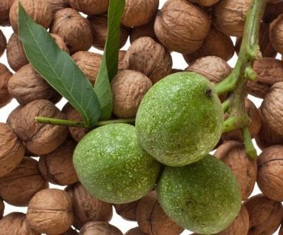 Noz verde é rica em uma variedade de vitaminas benéficas e elementos micro e macro