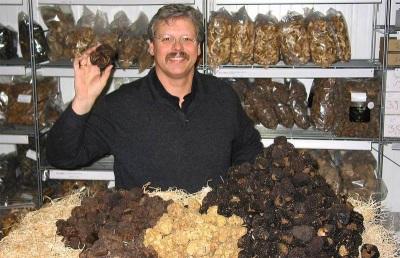 Препоръки за избор и закупуване на трюфелни гъби