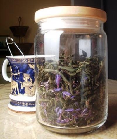 Daños y contraindicaciones del té ivan.