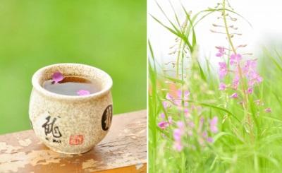Aceite de té de ivan