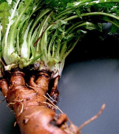 Púpava Root chudnutie