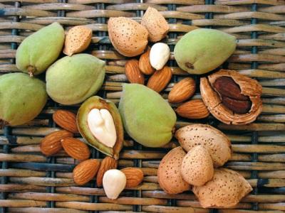 Mandeln sind reich an vielen Vitaminen und Mineralstoffen.