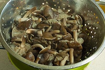 Gekochte Pilze