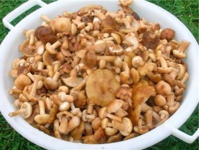 Frische Pilze essen