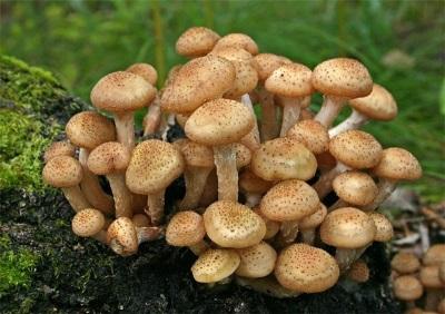 Właściwy wybór grzybów ponownie.