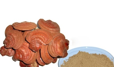 Τα μανιτάρια Reishi έχουν πλούσια χημική σύνθεση