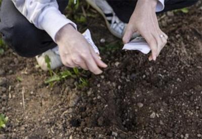 Σπορά σπόρων σε ανοιχτό έδαφος