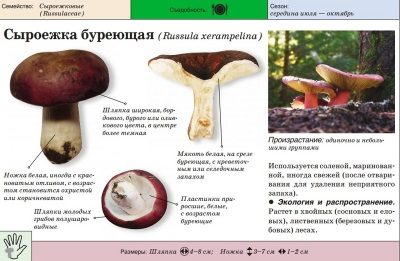 Brown Russula