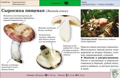 Makanan Russula