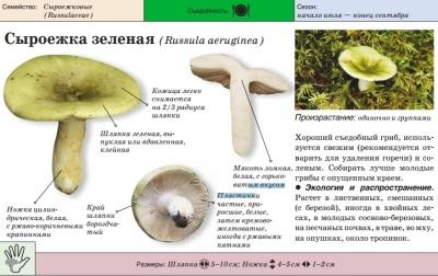 Green Russula