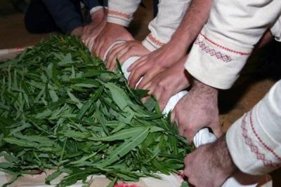 Blätter von Weiden-Tee verdrehen