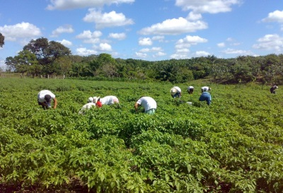 In Mexiko wird Jalapeno fast überall angebaut.