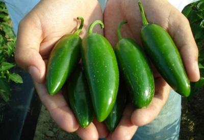 Το πιπέρι Jalapeno έχει αρκετές ωφέλιμες ιδιότητες για το σώμα.
