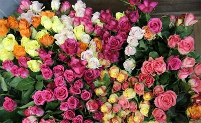 Die chemische Zusammensetzung von Rosen
